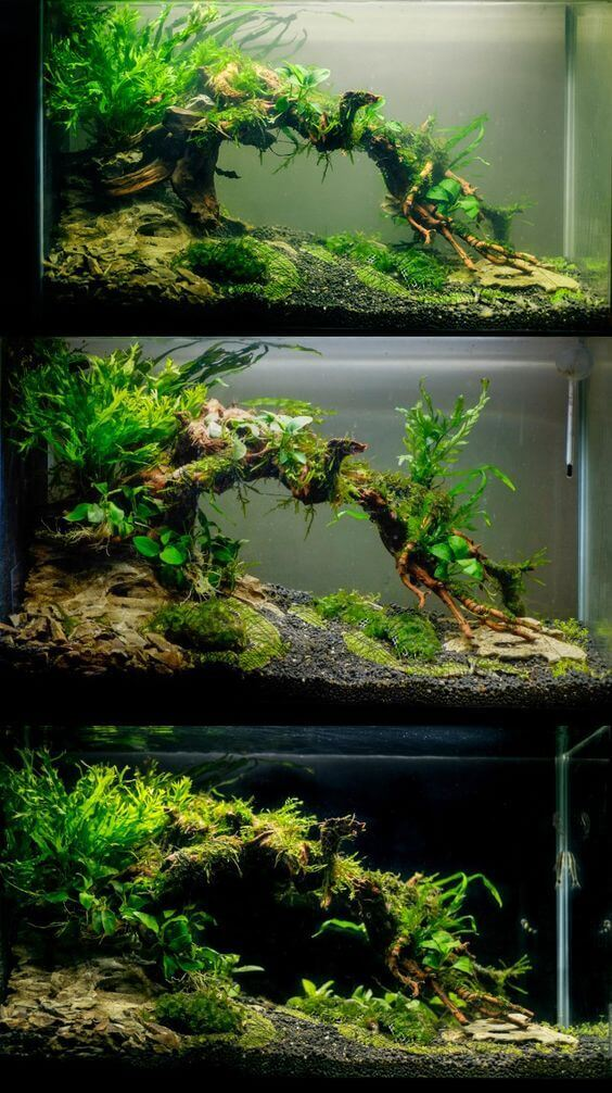 Aquascaping Could Be A Kind Of Art Where Imagination And Creative Thinking  Play A Necessary Duty, Yet Mastering The Foundation Of This Process Is  Primary If ...