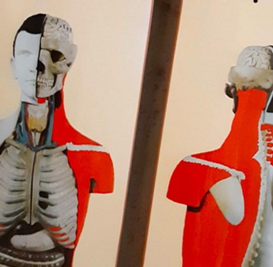 Anatomy Pro Series By Phntm For Antiz Skateboards 1