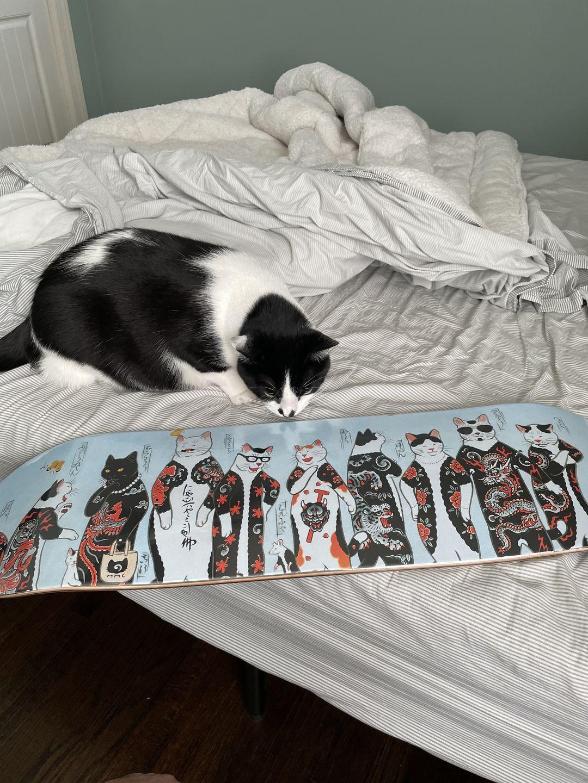 Gang Cat Skateboard Byhoritomo For Monmon Cats 5