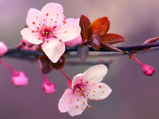 Blossom. . .