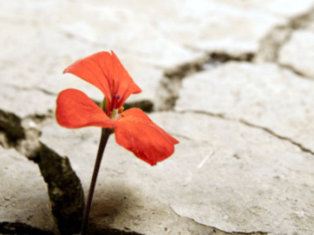 Adversity Grows. . .
