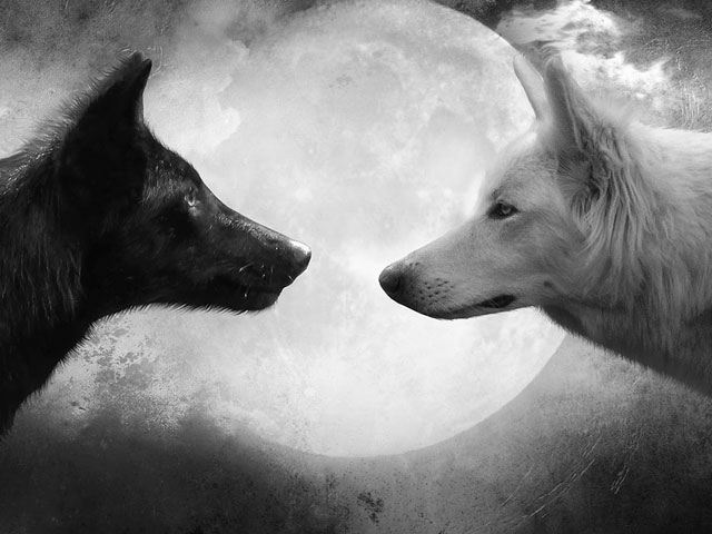 Two Wolves. . .