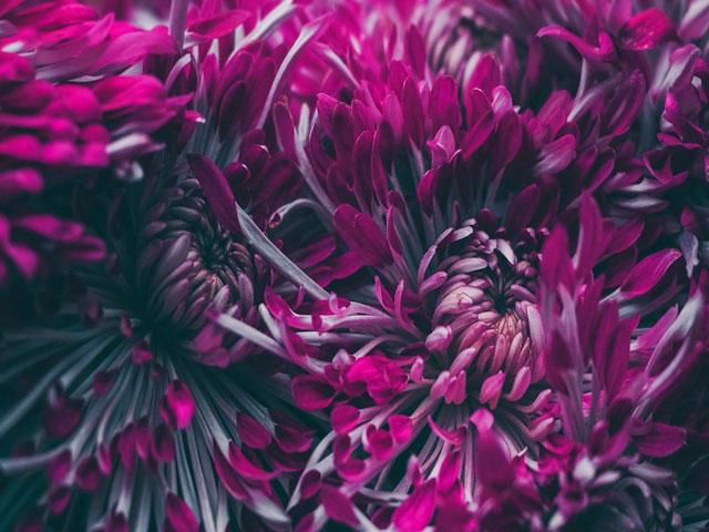 Genuine Bloom. . .