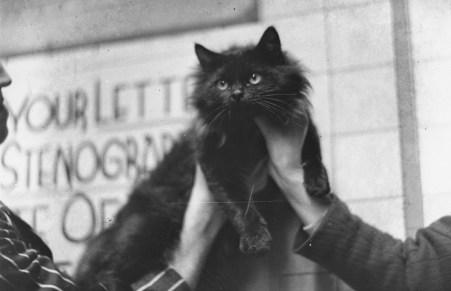 Fascinating: 11 Tweets C. S. Lewis' Cat Should Have Tweeted