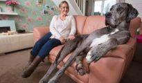 freddy the tallest dog