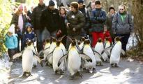 walk like penguin on ice to avoid slipping