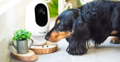 best-pet-Monitoring-Cameras