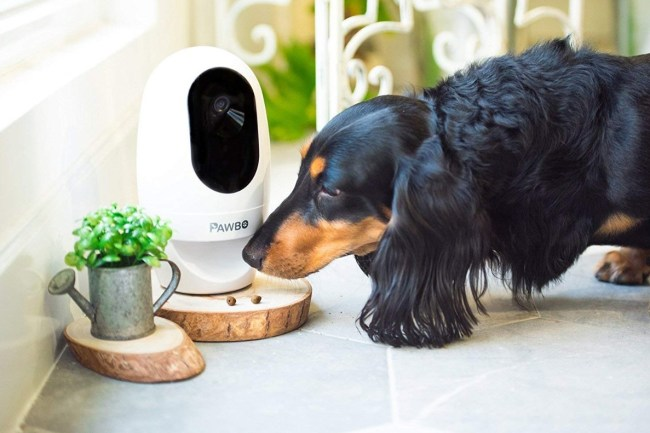 best-pet-Monitoring-Cameras