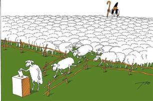voting sheep
