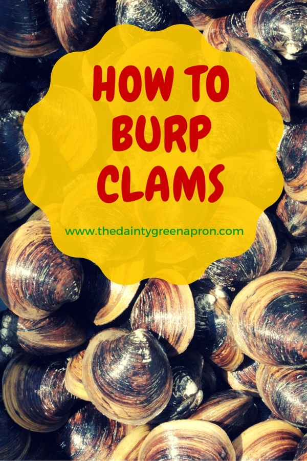 How to Burp Clams | The Dainty Green Apron