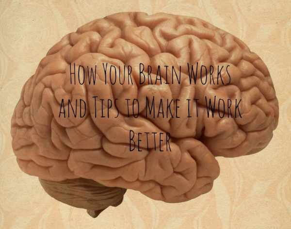 How your brain works and tips to make it work better #health