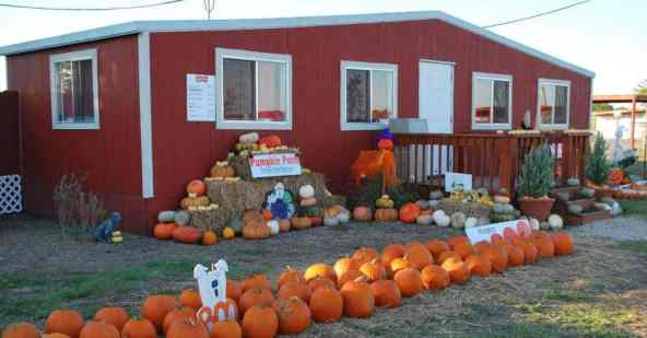 Gentle Zoo Pumpkin Patch
