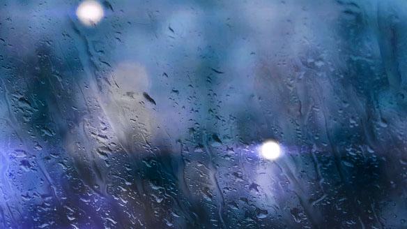 Raindrops Falling On Flowers Wallpaper Rain Bokeh Www Thedanw Com