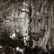 Lowcountry Cypress by J Riley Stewart