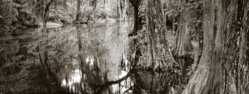 Lowcountry Cypress by J Riley Stewart