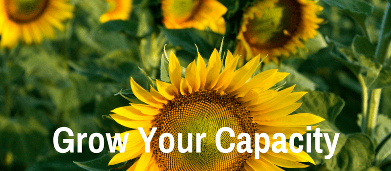 sunflowers with text 'grow your capacity'