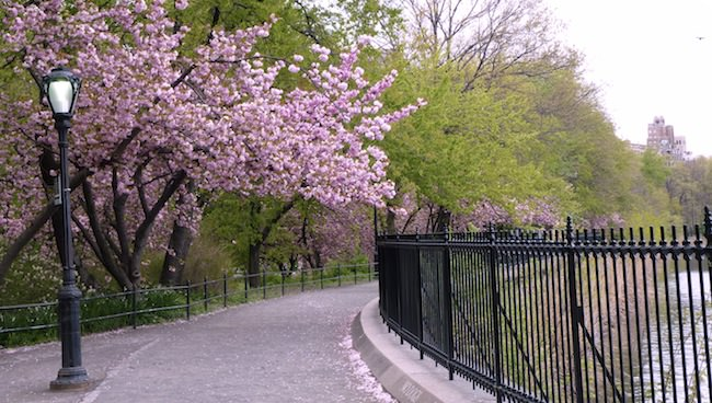 panorama central park 2
