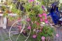 Fleurs Chiang Mai Thaïlande
