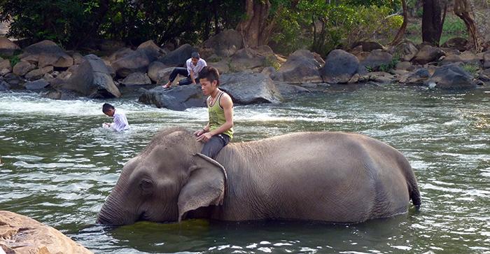 Eléphant Tat Lo Laos