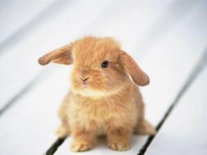 blissfully-cute-baby-animals-baby-bunny-5