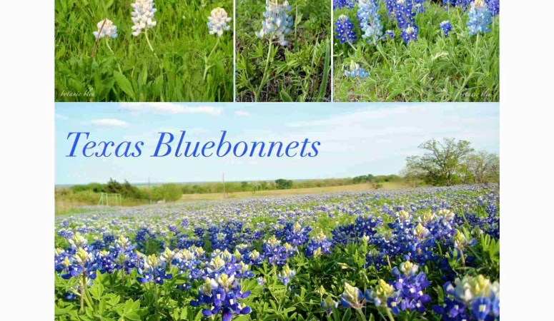 Botanic Bleu 12