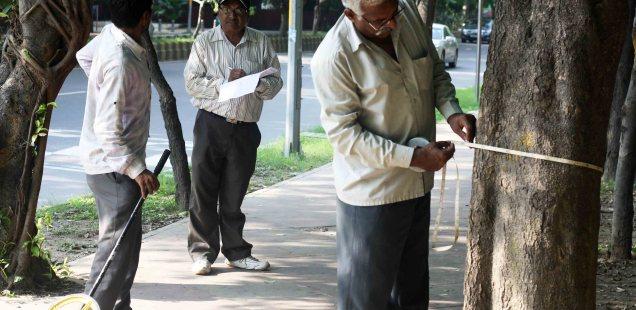 City Moment – The Tree Surveyors, Bhisham Pitamah Marg