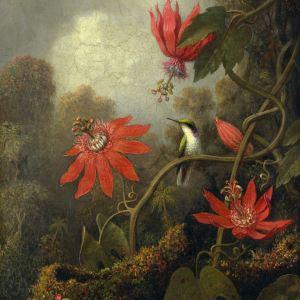 Hummingbird and Passionflowers - Martin Johnson Heade