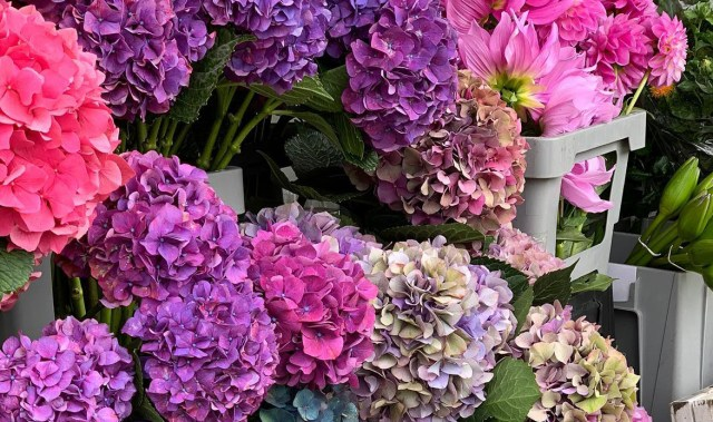 Get ready to have fresh floral bouquets brightening your home