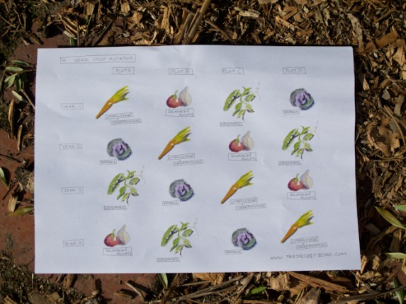 permaculture-plant-list-4-year-crop-rotation