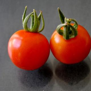 The Design Confidential / Accidental Tomato Garden and Celery Planting
