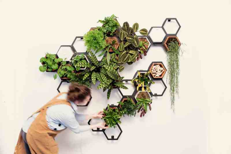 Chalk & Moss Horticus - indoor Living wall kits