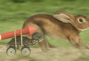 the confident tortoise rocket and the hare race