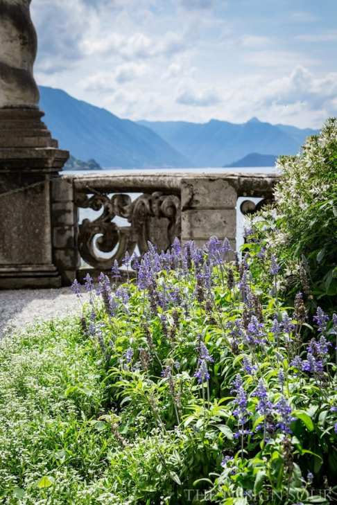Lavender at Villa Monastero