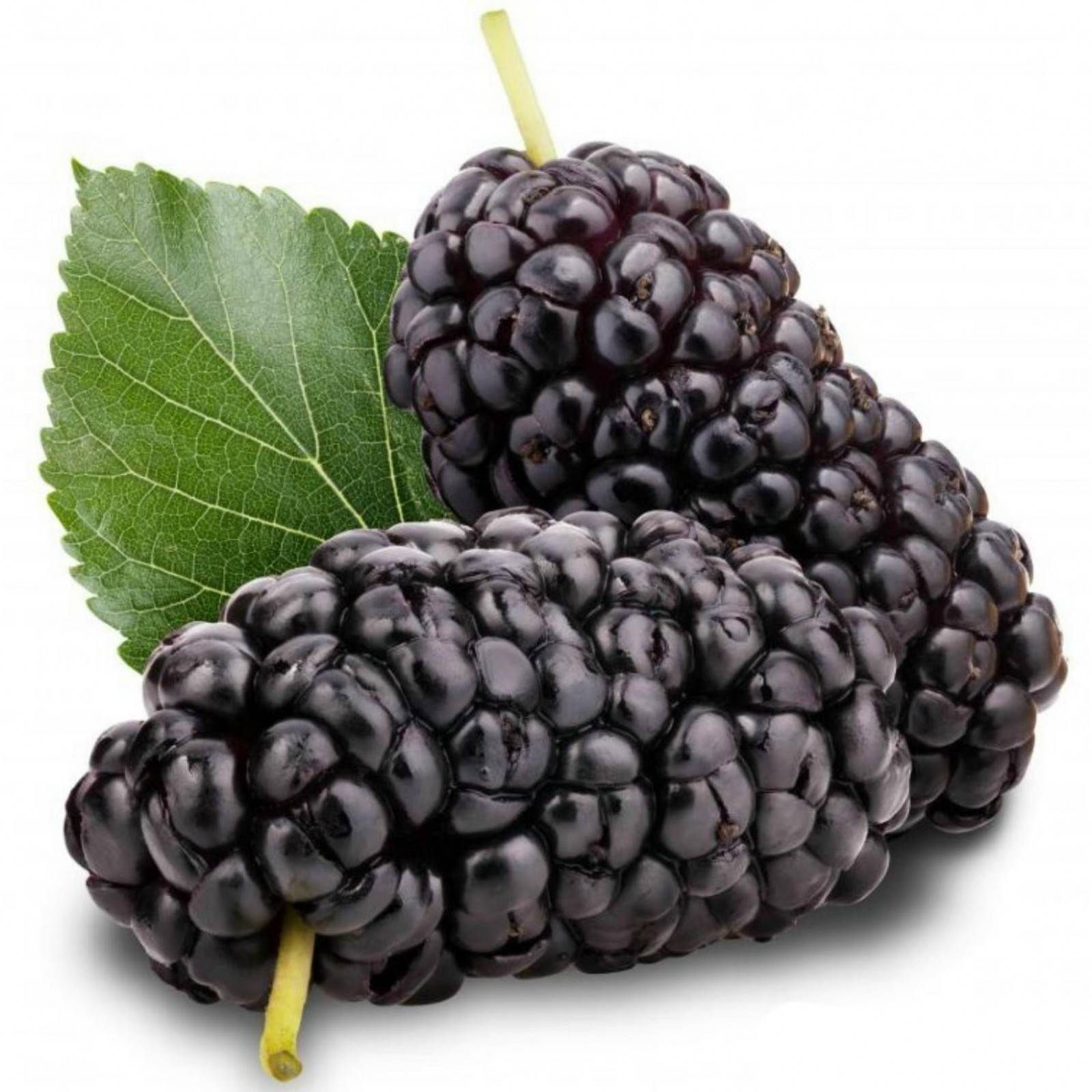 4 Side Effects Of Mulberry Worth Knowing