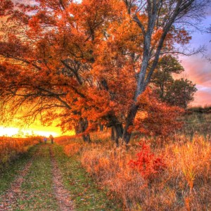 The Slow Fall of Autumn