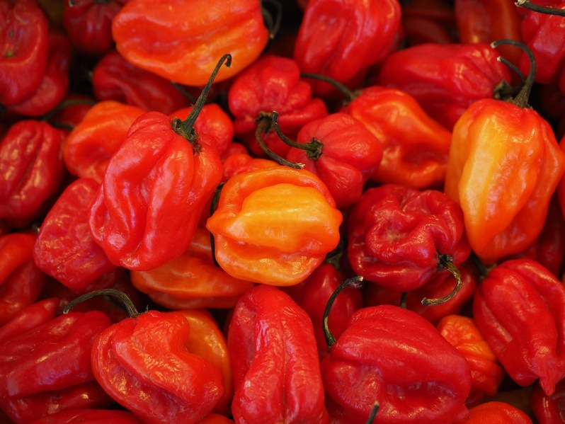 hot peppers help with weight loss