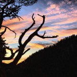 Join me in the Eastern Sierras this October