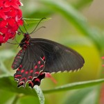 2011 Butterfly Jungle, Wild Animal Park, San Diego, CA