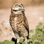Whoa! Hawk alert!