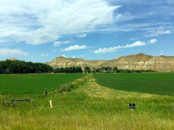 Buffalo Wyoming Fields