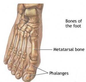 metatarsal-phalangeal-joint