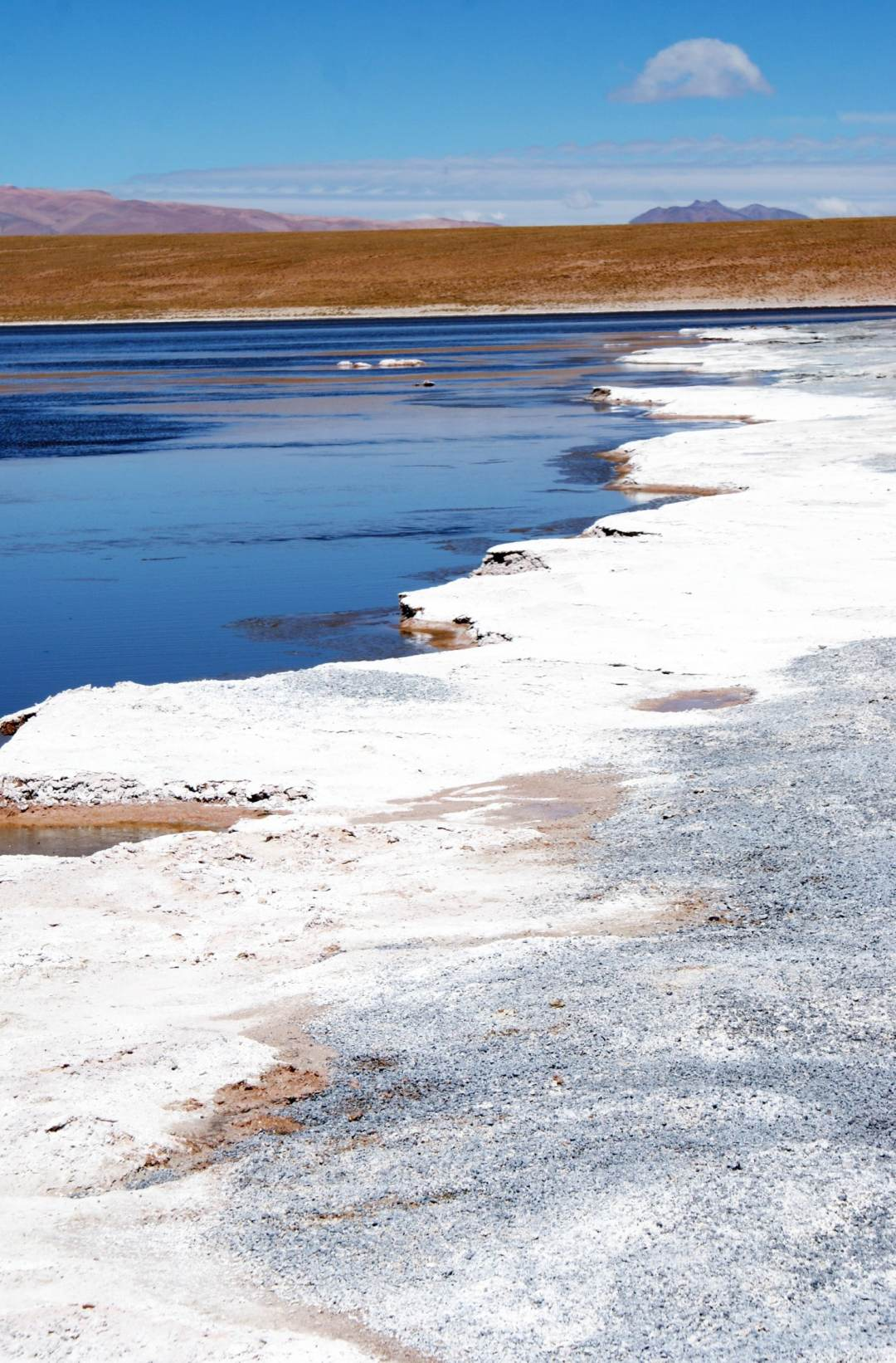 Laguna Blanca - shot of the thick salt crust at the edge of the lake