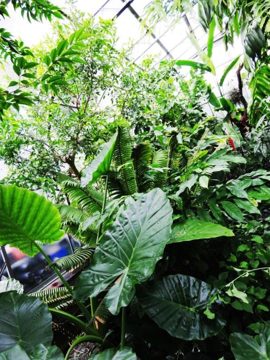 Tropical Glasshouse at the Oxford Botanic Garden