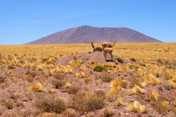 The best things to do in the Atacama Desert - tales from a road trip