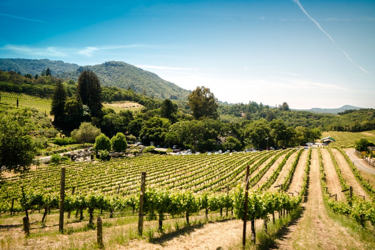 Sonoma, California is the perfect US Road trip stop. Read the full guide