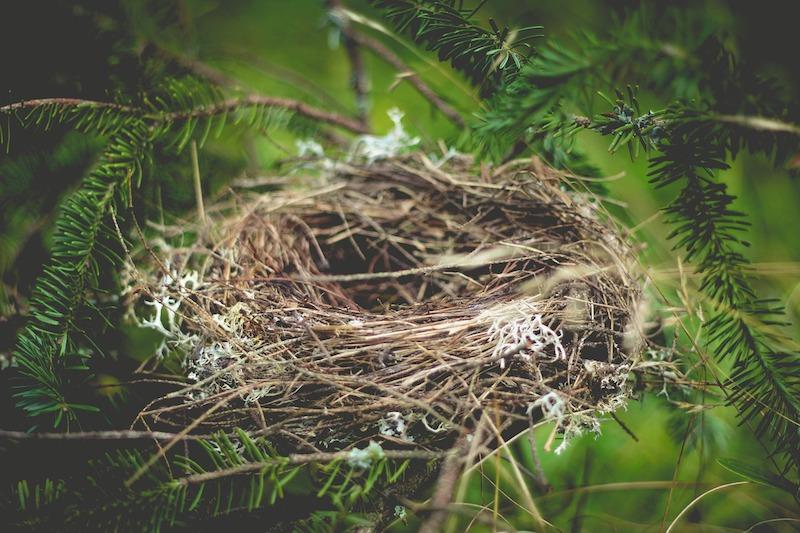 Empty Nest Syndrome Post-Divorce