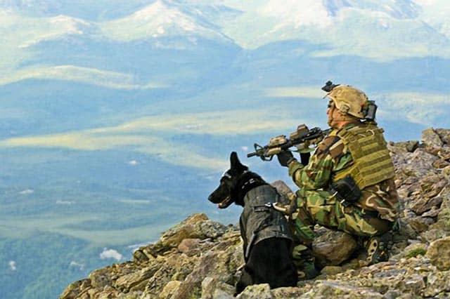 Navy Seal Dog