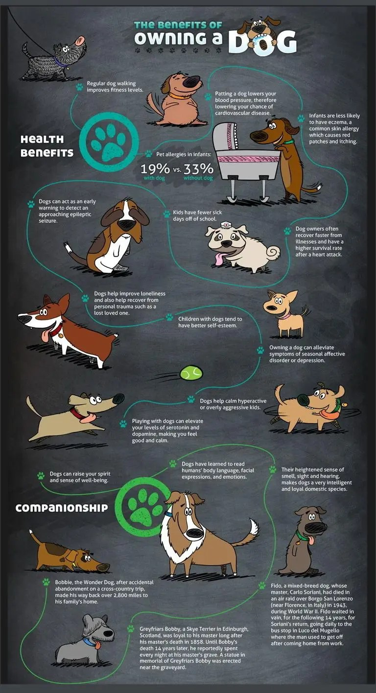 dogs-benefits-of-owning-a-dog-1-of-22