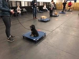 Puppy Training Mississauga