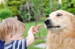 Integrity in Dog Training, dog aggression